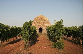 """""""Turismo del Vino in Italia"""": al Senato la presentazione del volume di Stefàno e Cinelli Colombini"""