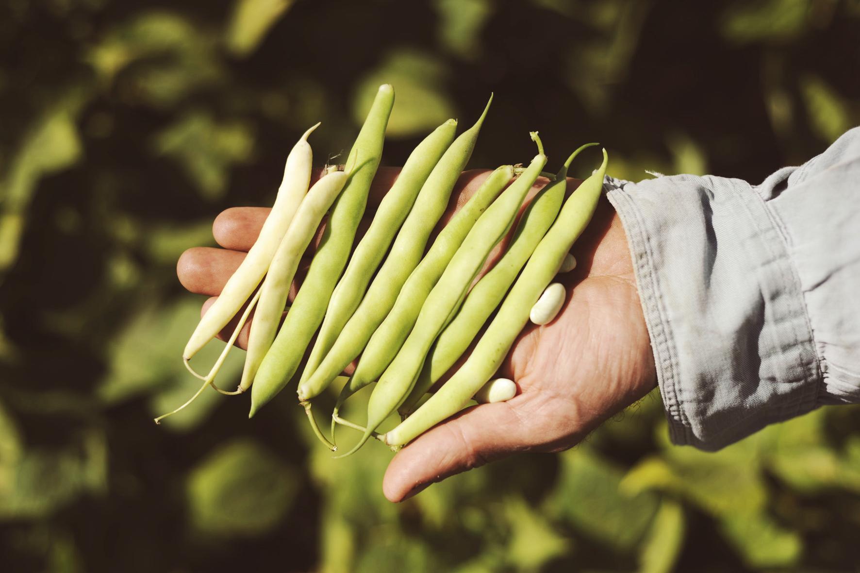 L'AICS per l'agricoltura e il futuro del pianeta: il webinar del programma FAO sul patrimonio agricolo mondiale GIAHS