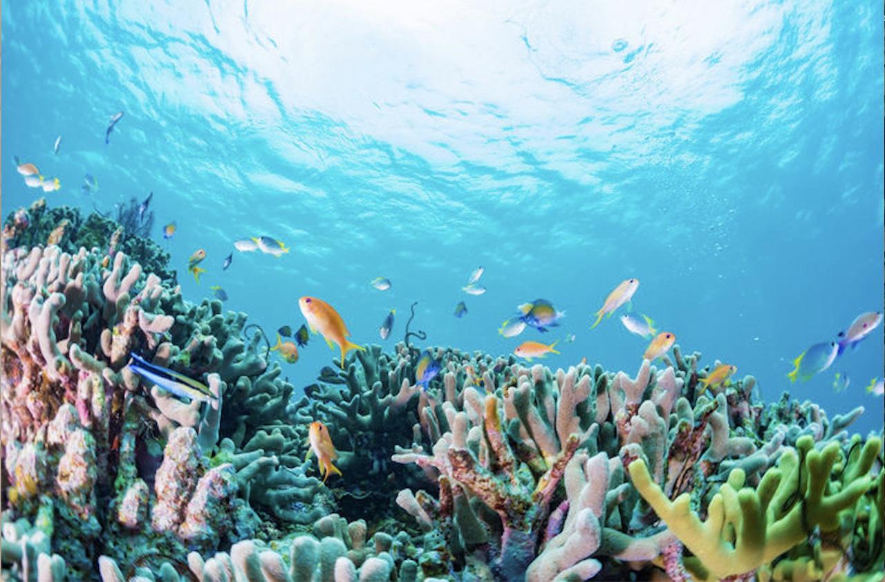 Accordo tra Università Bicocca e Maldive per un centro di ricerca per la salvaguardia della barriera corallina