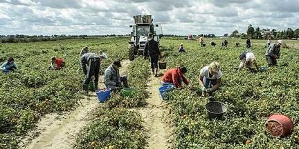 GARAVINI (IV): URGENTE REGOLARIZZARE I LAVORATORI MIGRANTI NELL'AGRICOLTURA