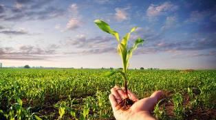 RICERCA E INNOVAZIONE ITALIANA AL SERVIZIO DELL'AGRICOLTURA GIAPPONESE