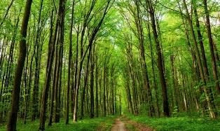 A MESTRE UN CONVEGNO SUL RUOLO ECOSISTEMICO DELLE FORESTE