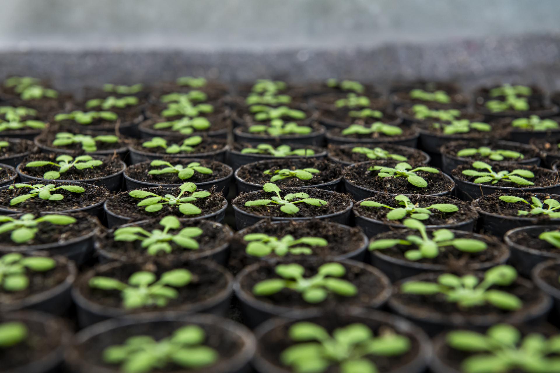 """Lo iodio fa bene anche alle piante: pubblicati su """"Frontiers in Plant Science"""" i risultati dello studio di CNR e Scuola Superiore Sant"""