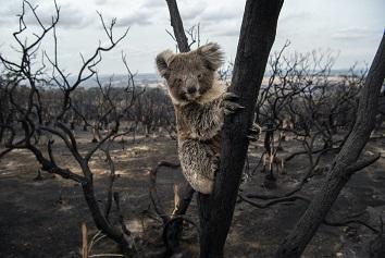 Dobbiamo fare pace con il pianeta: il 2020 visto dal WWF
