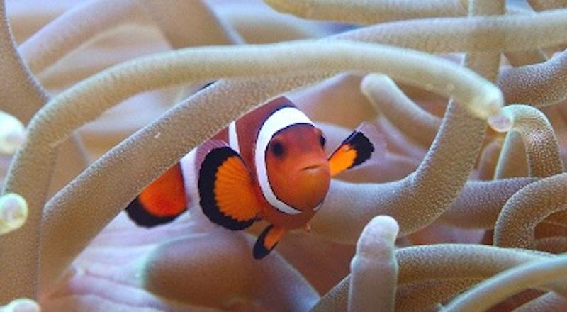 """""""Sulle tracce di Nemo"""": il contributo italiano ad uno studio internazionale sull"""