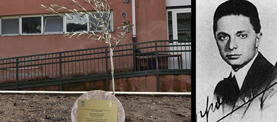 Laboratorio della memoria: un olivo in ricordo di Giovanni Palatucci