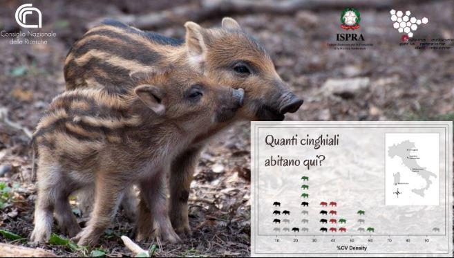 Censire gli animali selvatici: nuova ricerca Cnr-Ispra