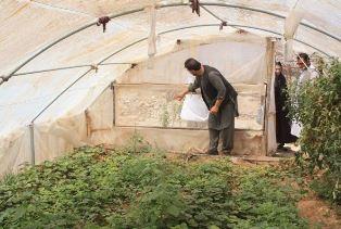 AFGHANISTAN: PICCOLI AGRICOLTORI CRESCONO GRAZIE ALLA COOPERAZIONE ITALIANA
