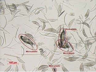 CNR: OLOGRAFIA DIGITALE E INTELLIGENZA ARTIFICIALE IDENTIFICANO MICROPLASTICHE IN MARE