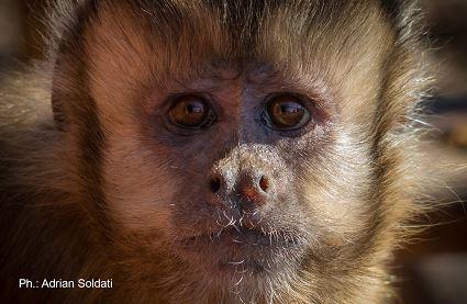 """""""Economia da Primati"""": lo studio internazionale curato dal Cnr"""