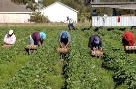 CONFEURO: URGENTE UN BANDO PER LAVORATORI AGRICOLI PER SALVARE I RACCOLTI
