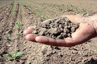 SICCITÀ: NUOVI AIUTI DELLA COMMISSIONE PER GLI AGRICOLTORI EUROPEI