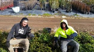 IL COMITES NSW INCONTRA I GIOVANI ITALIANI CHE PRESTANO LAVORO NELLE FARM AUSTRALIANE: TAPPA A GRIFFITH NELLA RIVERINA