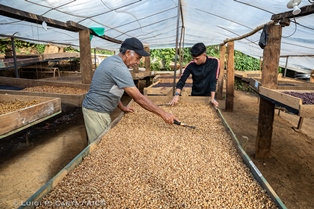 SAN SALVADOR: RISCATTARE IL CAFFÈ SALVADOREGNO PER RESTITUIRE DIGNITÀ AI PICCOLI PRODUTTORI - di Noemi Marchegianic